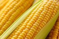 转基因玉米致癌无依据 未进口转基因胡萝卜
