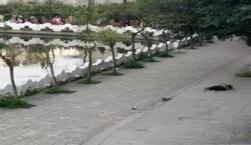 泸县中学生死亡案:权威声音如何才能掷地有声