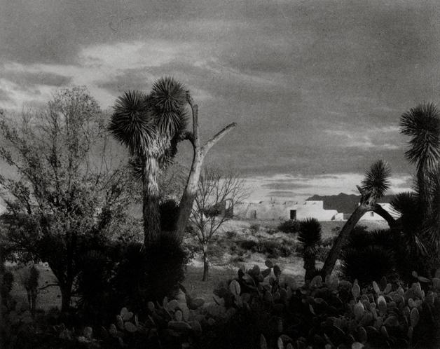 作品欣赏:墨西哥萨尔蒂约附近