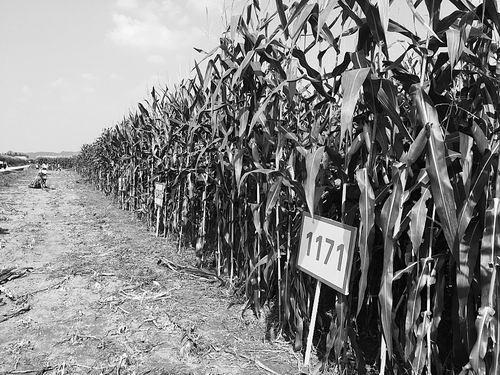 """科学家谈""""十三五""""现代农业产业技术体系"""