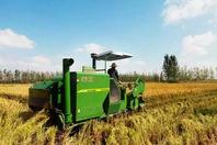十九大这一年,小麦,玉米,油葵,花生,大葱产量都是丰收