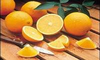 脐橙王树结果720斤