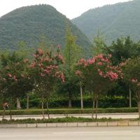 兴义丰都新区的道路绿化很美,美得像一首抒发内心情感的诗!