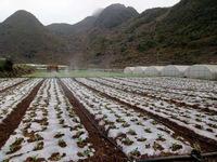 住在贵州省兴义市乌沙镇贵州龙博物馆边上的蔬菜基地