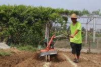 稻庄镇:草莓种植地打垄开始