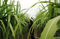稻庄镇:加快发展现代高效农业